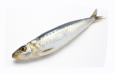 魚の4割にプラスチックが入っているって本当?