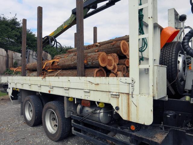 林業が復活すると日本中に雇用が50万人生まれる!?